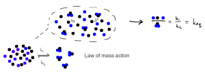 Law of mass action in equilibrium chemistry.